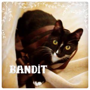 Bandit