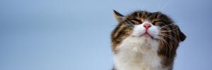 Cat Longevity