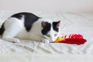 Playing with your cat