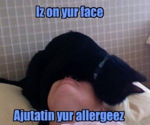 Living with Cat Allergies