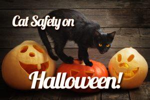 Cat Safety on Halloween