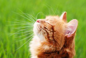 Cat in Outdoor Catio