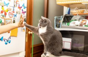 Train Your Cat for Enrichment and Fun