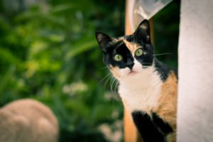 Enrichment for your outdoor cat