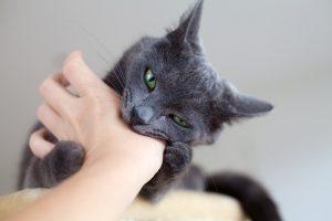 Petting Aggression