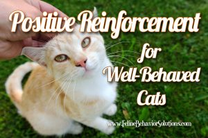 Positive reinforcement for well-behaved cats