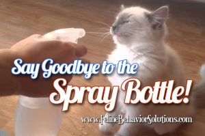 Stop Spraying Cats with Water