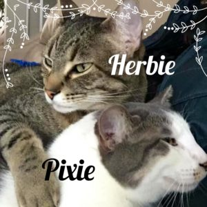 Herbie & Pixie