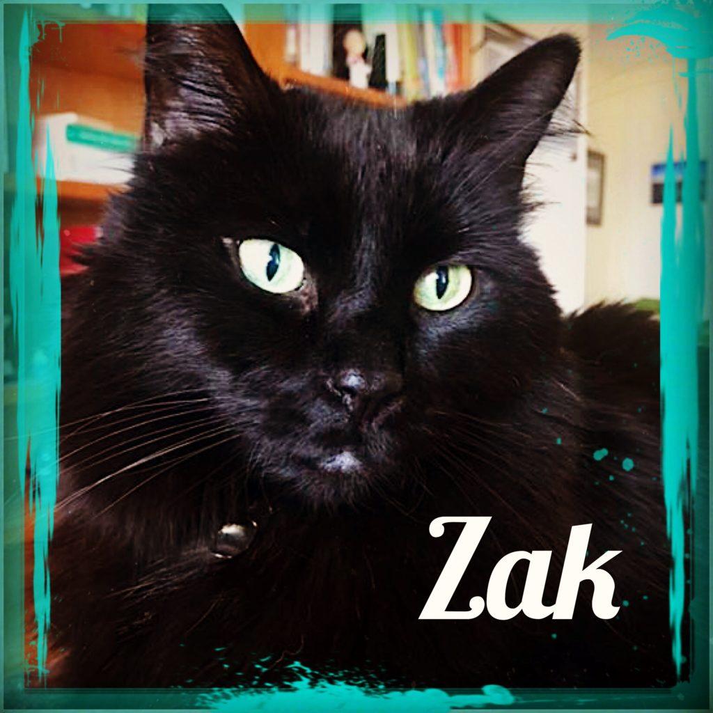 Zak - Feline Behavior Solutions Testimonial