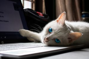 Cat Lounging on laptop comupter
