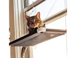 cat on a cot haning in a window