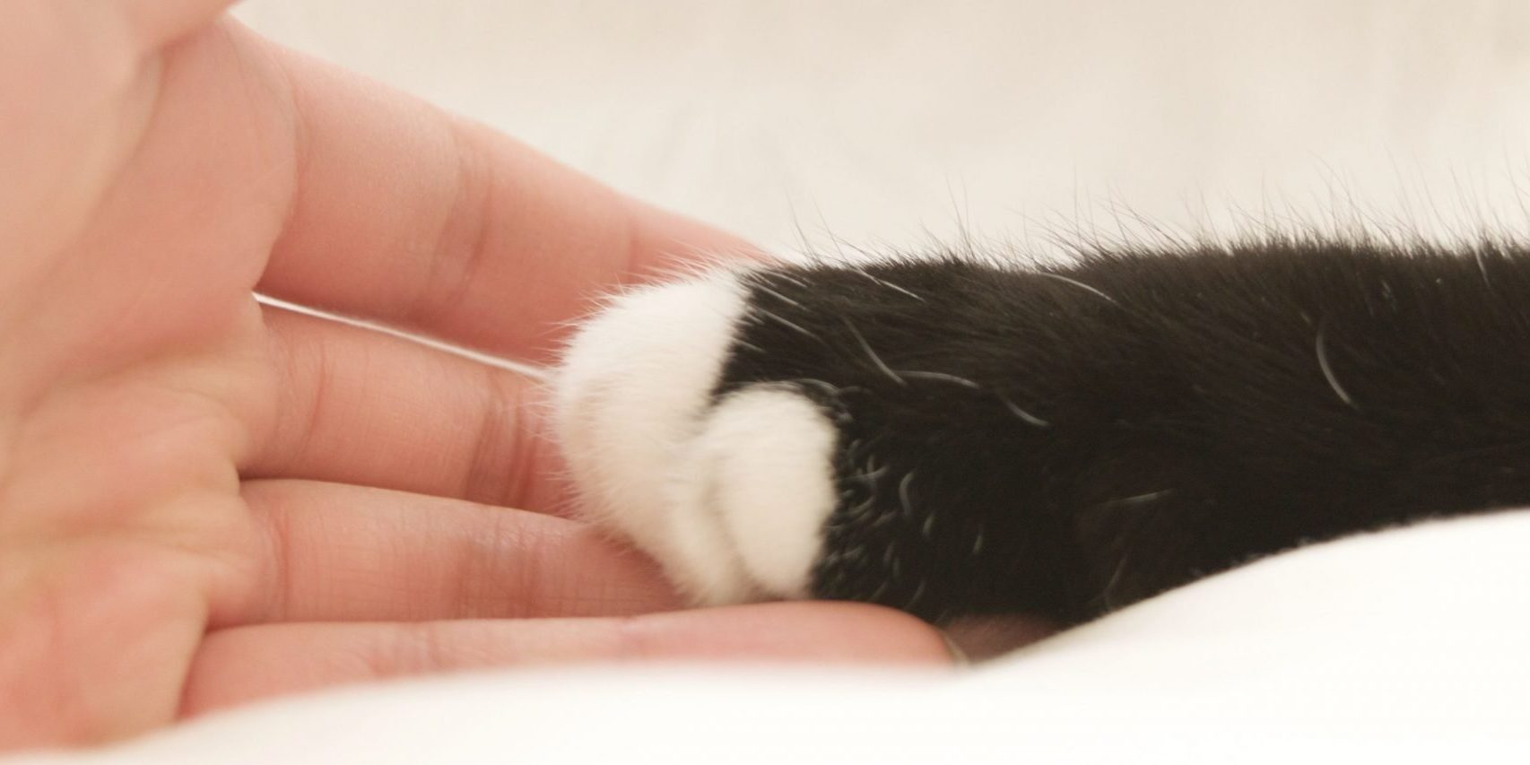 How to Build Your Cat's Trust